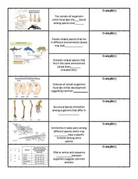 Evidence of Evolution interative notebook foldable