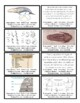 Evidences of Evolution Flash Card Activity (7A)