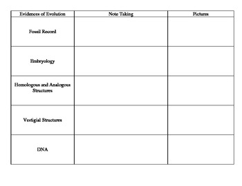 Evidences of Evolution Graphic Organizer