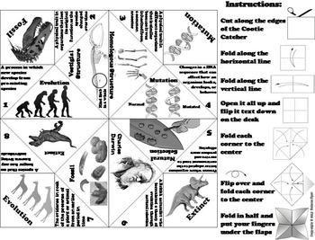 Evolution Activity/ Foldable: Natural Selection, Fossils, etc. (Biology Unit)