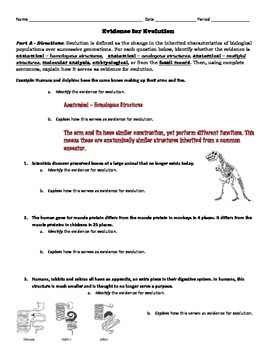 evolution activity evidence for evolution identification analysis with key - Evidence Of Evolution Worksheet Answers