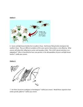 Evolution, Adaptations, Homologous, Analagous