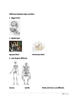 Evolution: Ape Versus Man