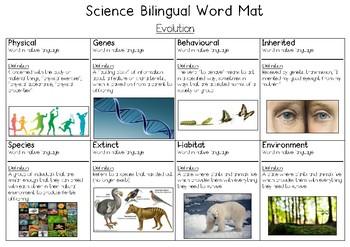Evolution Bilingual Word Bank