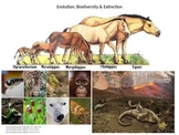 Evolution, Biodiversity & Extinction