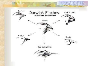 Evolution - Charles Darwin