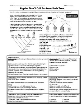 Reading Cladograms Worksheets Teaching Resources Tpt