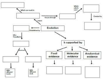Evolution Concept Map
