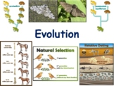 Evolution Flashcards - task cards, study guide, state exam prep 2019 2020