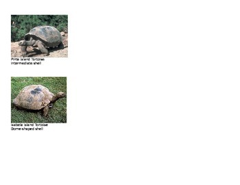 Evolution:  Galapagos Island Tortoise Comparison Activity