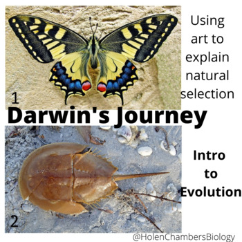 Evolution Inquiry Based Investigation