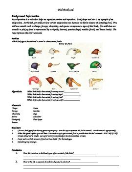 Evolution Lab Adaptation of Bird Beaks by Scienceedu | TpT