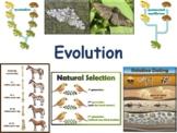Evolution Lesson - classroom unit, study guide, state exam