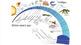 1+ MONTH BUNDLE: Evolution, Natural Selection, Darwin: ppt, quizzes, reviews, HW