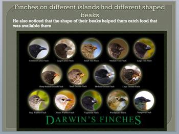 Evolution, Natural Selection, and Charles Darwin