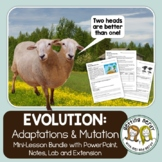Adaptations, Mutations and Natural Selection - Evolution PowerPoint and Handouts