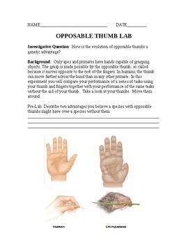 Evolution Opposable Thumb