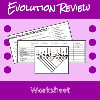 evolution review worksheet by erin frankson teachers pay teachers. Black Bedroom Furniture Sets. Home Design Ideas