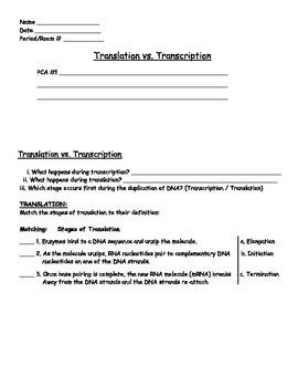 Evolution - Translation and Transcription Worksheet