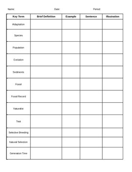 Evolution Vocabulary Graphic Organizer