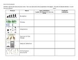 Evolution Vocabulary worksheet foldable quiz assessment