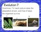 Evolution Warm Up or Exit Ticket Digital Task Card Set