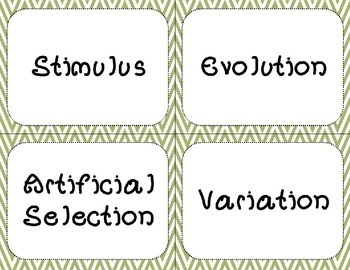 Evolution Word Wall Words