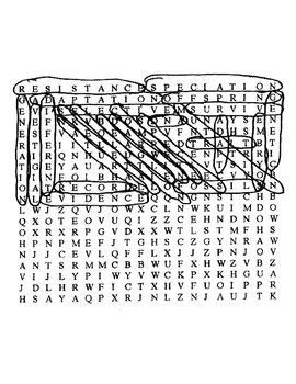 Evolution Wordsearch with Key