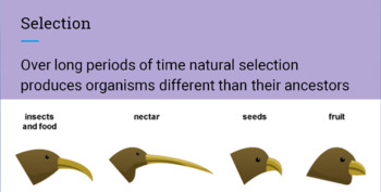 Evolution through Natural Selection -- PowerPoint, Notes, 9 Review Worksheets