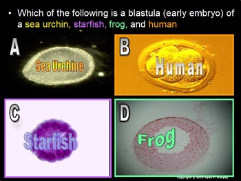 Evolution and Natural Selection Lesson