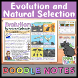 Evolution and Natural Selection Doodle Notes