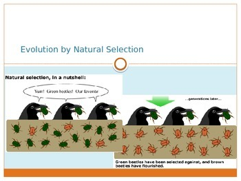Evolution and Natural Selection *Editable*