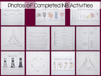 Evolution and Natural Selection Interactive Notebook Unit