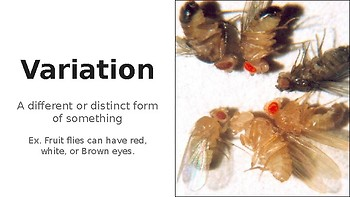 Evolution and Natural Selection Posters