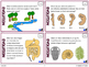 Evolution and Natural Selection Task Cards (Differentiated