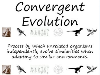Evolution and Natural Selection Word Wall Vocabulary Cards