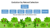 Evolution by Natural Selection Interactive Tutorial