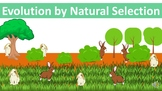 Evolution by Natural Selection PowerPoint (w/ free handout)