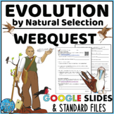 Natural Selection With Darwin  Evolution WebQuest