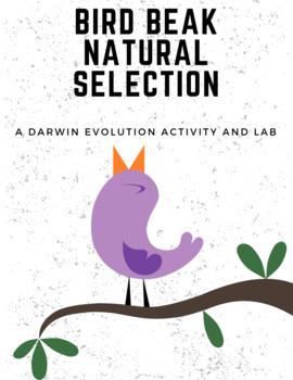 Bird Beak Adaptations (Evolution by Natural Selection)