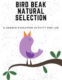 Bird Beak Natural Selection