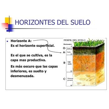Evolution of the soil horizons
