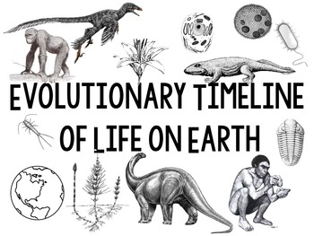 Evolutionary Timeline of Life on Earth to post on wall