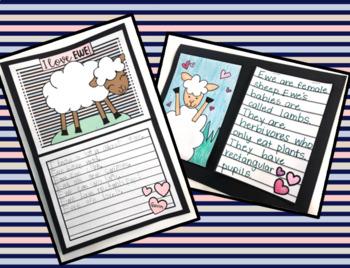 Ewe (Sheep) Informational Reading/Writing with I LOVE EWE Craft/Directed Drawing