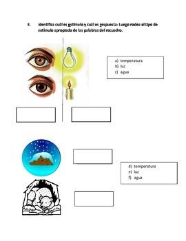 Examen de Ciencias:Seres Vivos y los Estímulos / Science test in Spanish: