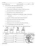 Examen sobre las plantas, partes de la flor y cadena alimentaria