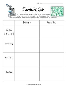 Examining Cells Lesson Plan and Worksheets