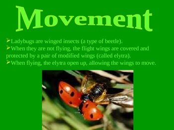 Example PowerPoint for Invertebrates Project