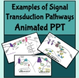 Examples of Signal Transduction Pathways Animated PowerPoi