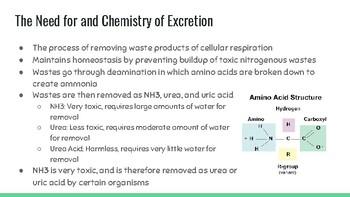 Excretion Presentation